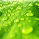 Water Drops Leaf Wallpapers