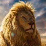 Lion 4k Wallpapers