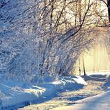 Enchanted Winter Wallpapers