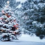 Forest Christmas Tree Wallpapers