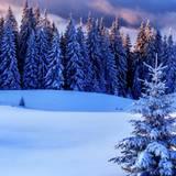 Winter Season Wallpapers