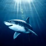 Cool Shark Wallpapers