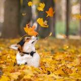 Fall Dogs Wallpapers