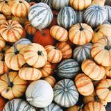 Autumn Pumpkim Wallpapers