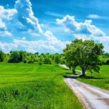 Tree Clouds Grass HD Wallpapers