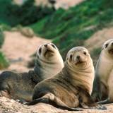 Seals And Sea Lions Wallpapers