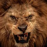 Lion Close Up Face Angry Wallpapers