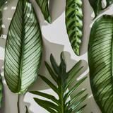 Leaf Desktop Wallpapers