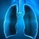 Respiratory System Wallpapers