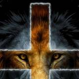 Lion Of The Tribe Of Judah Wallpapers
