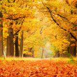 Autumn Weather Wallpapers