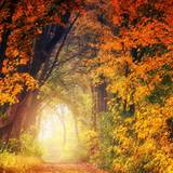 Autumn Trees Leaves Wallpapers