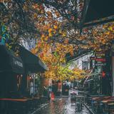 Rain City Autumn Wallpapers
