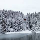 White Pine Wallpapers