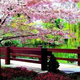 Nature Desktop Spring Wallpapers