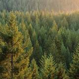 Boreal Forest Wallpapers