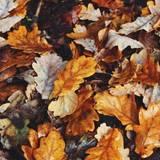 autumn 2021 wallpapers