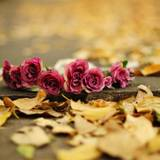 Autumn With Flowers Wallpapers