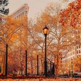 New York Autumn Leaves Wallpapers