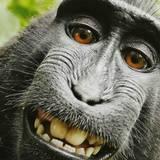 Monkey Meme Wallpapers