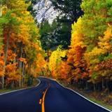 Autumn 1920x1080 Highway Wallpapers