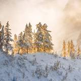 Mystic Winter Landscape Wallpapers